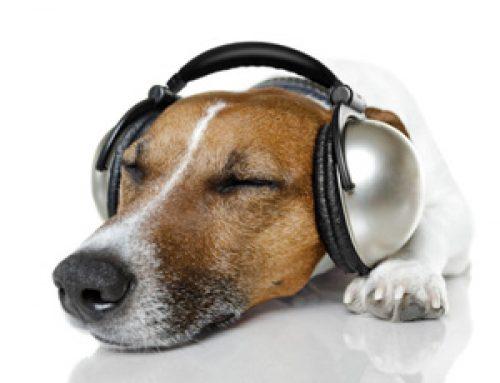 #7 Hörtraining für Zuhause